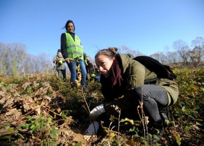 Akcija masovnog pošumljavanja na predstojećoj lokaciji mreže Natura 2000
